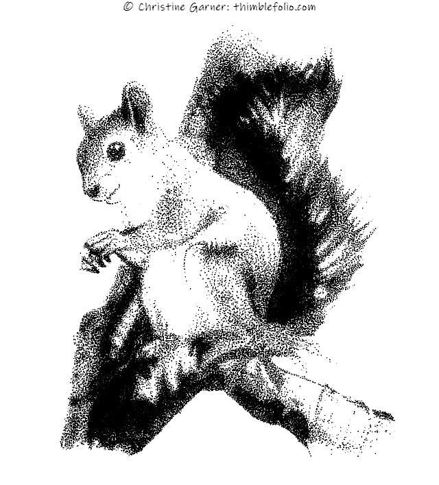 stipplingeffectsquirrel2